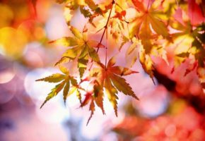 Fall Colors to Warm Up Your Home